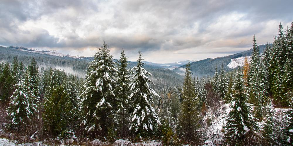 North Idaho in Early Winter