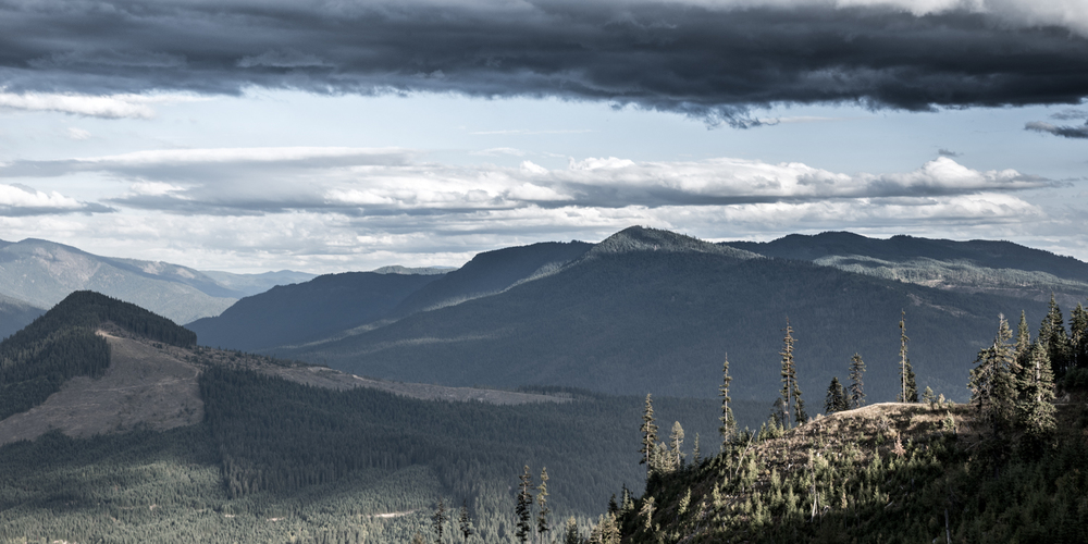 Clearwater Forest Overlook