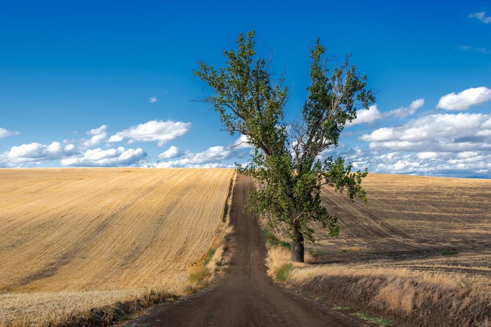 Back Road Fallow Fields