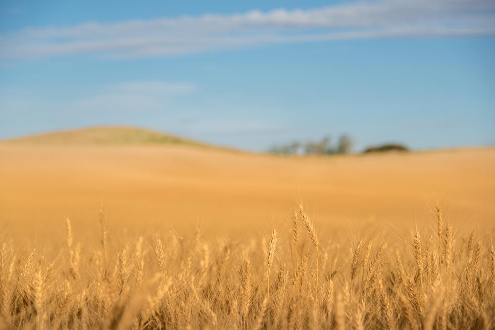 Harvest Time #3