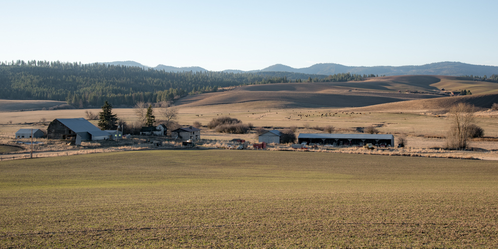 North Idaho Cattle Country