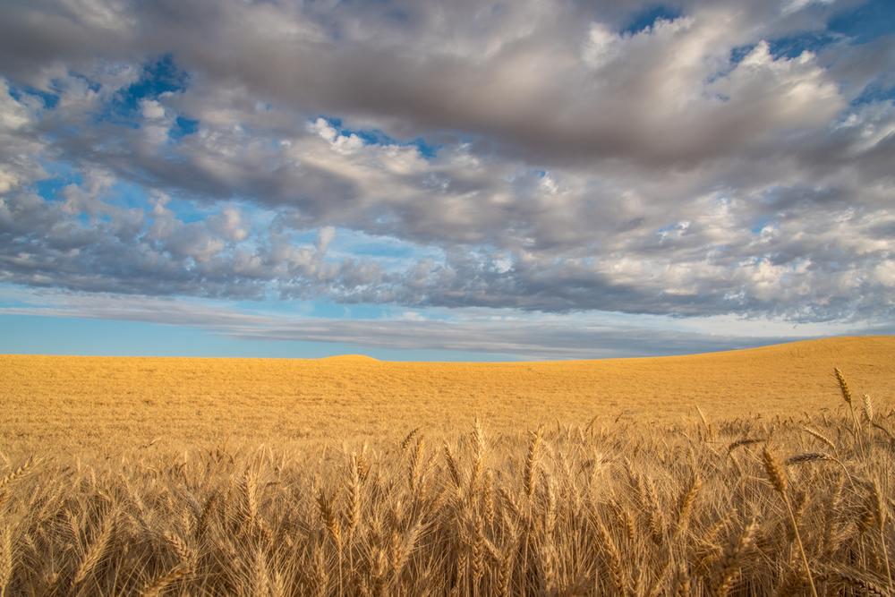 Harvest Time #1
