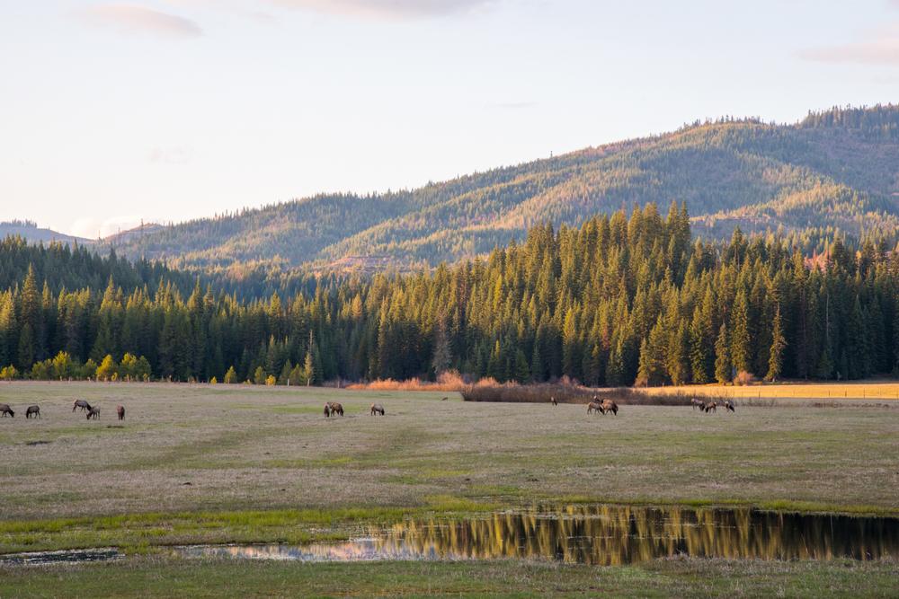 Elk Meadow