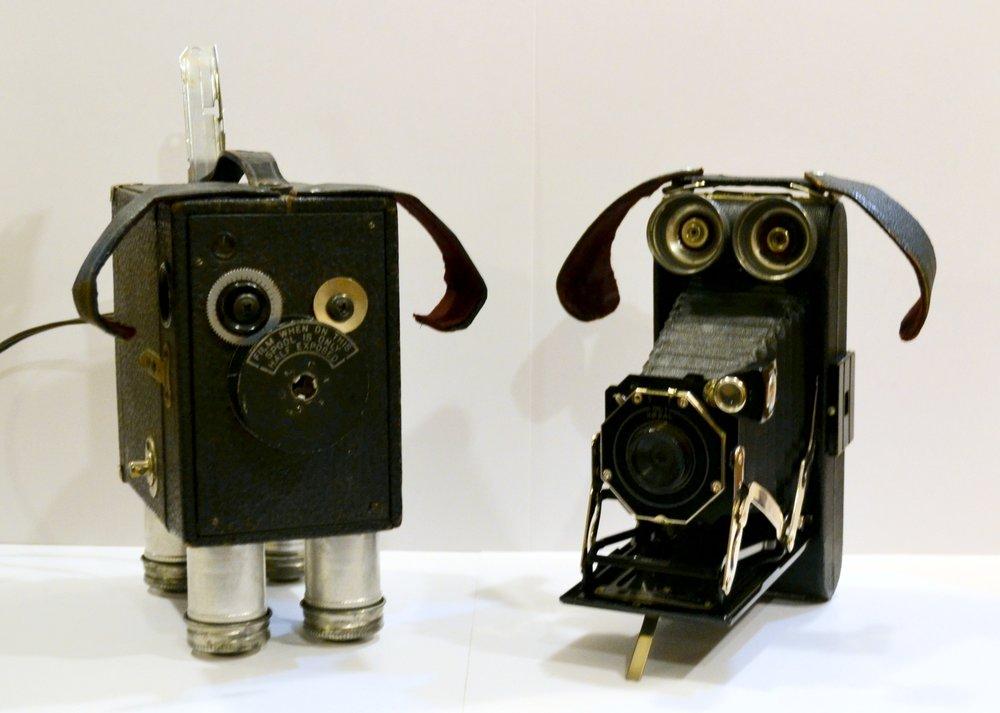 Camera Pups