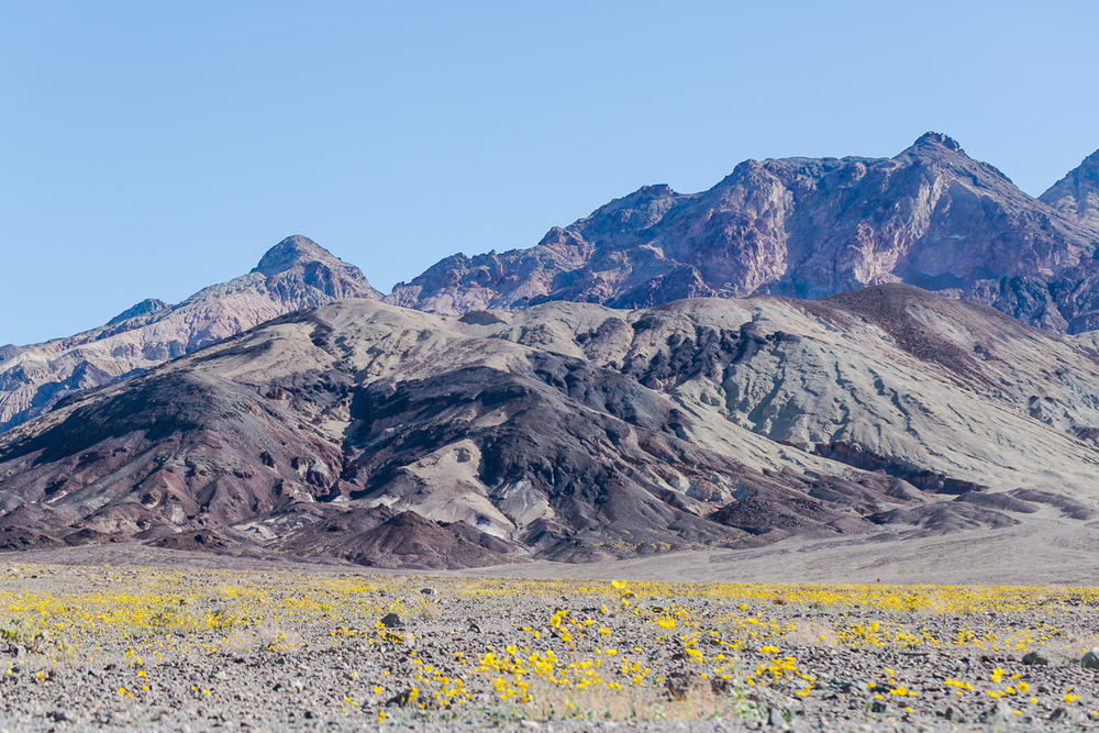 20160128_DeathValley_SuperBloom@JonesPhotographyCompany-019.JPG
