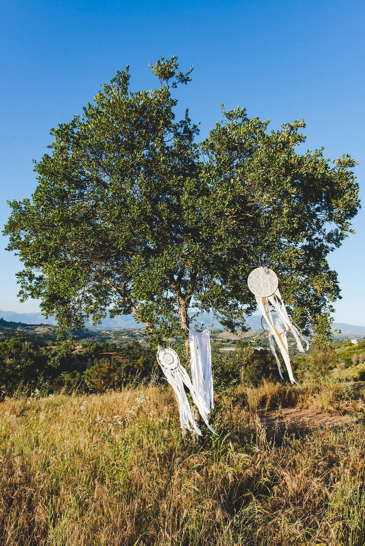 dream-catcher-tree-in-field@jonesphotographycompany.com