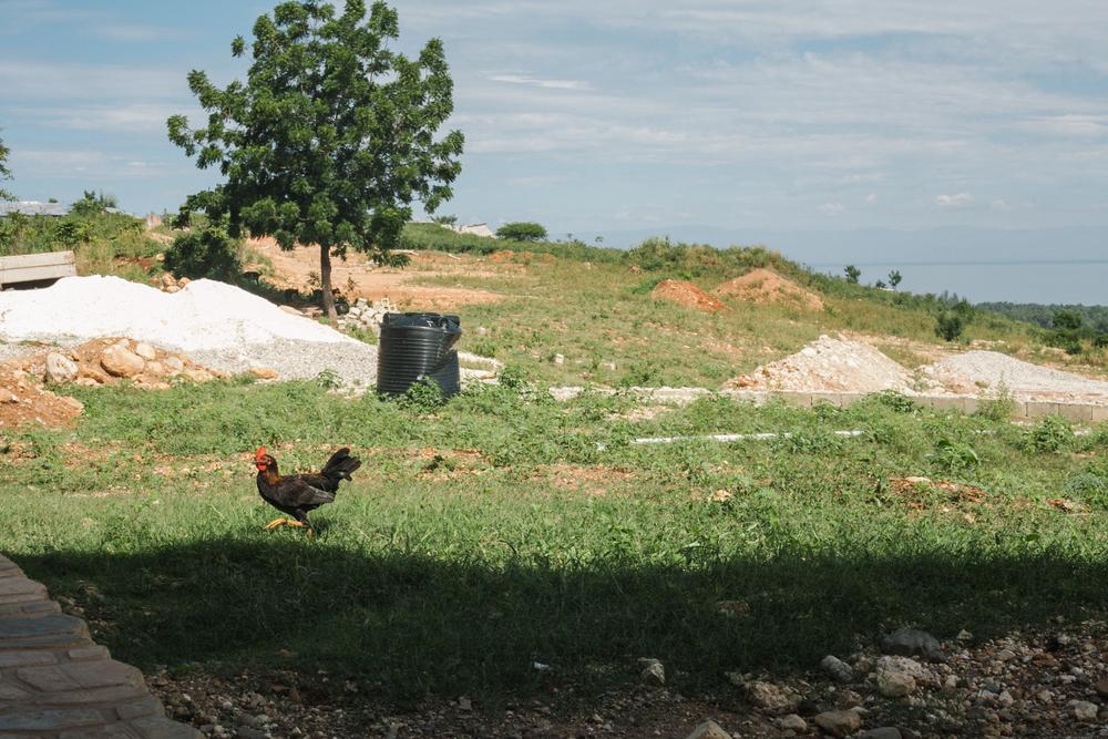 Haiti5starslores004.jpg