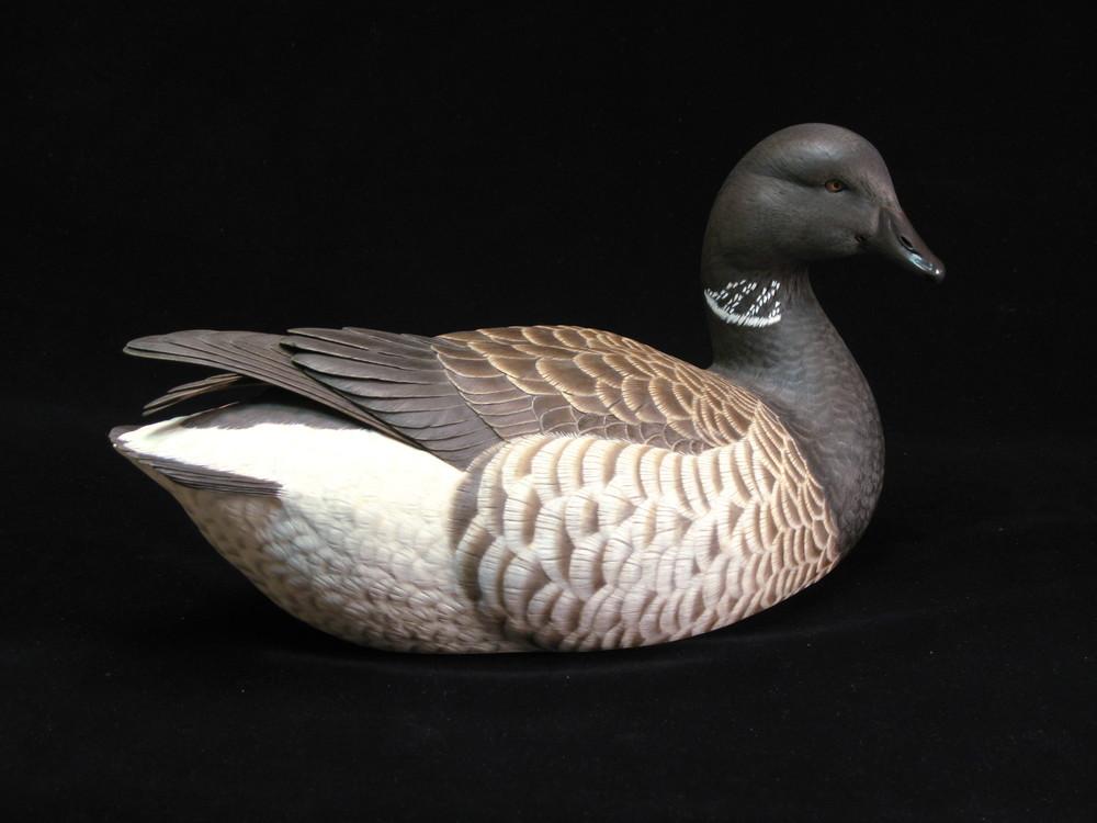 Brant Goose, Life-sized, ♂