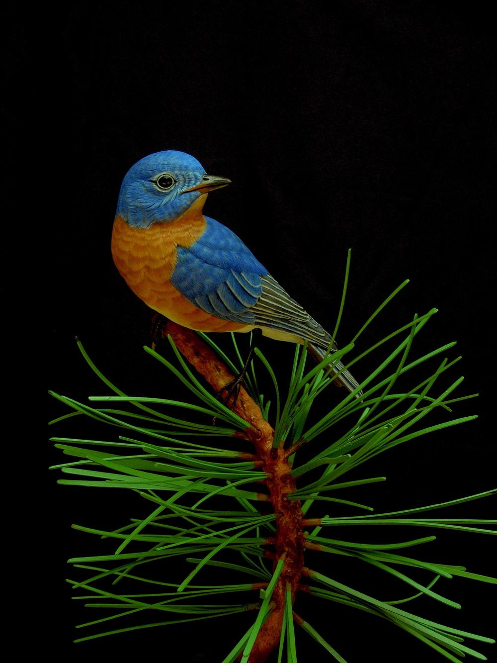Bluebird, Life-sized, ♂