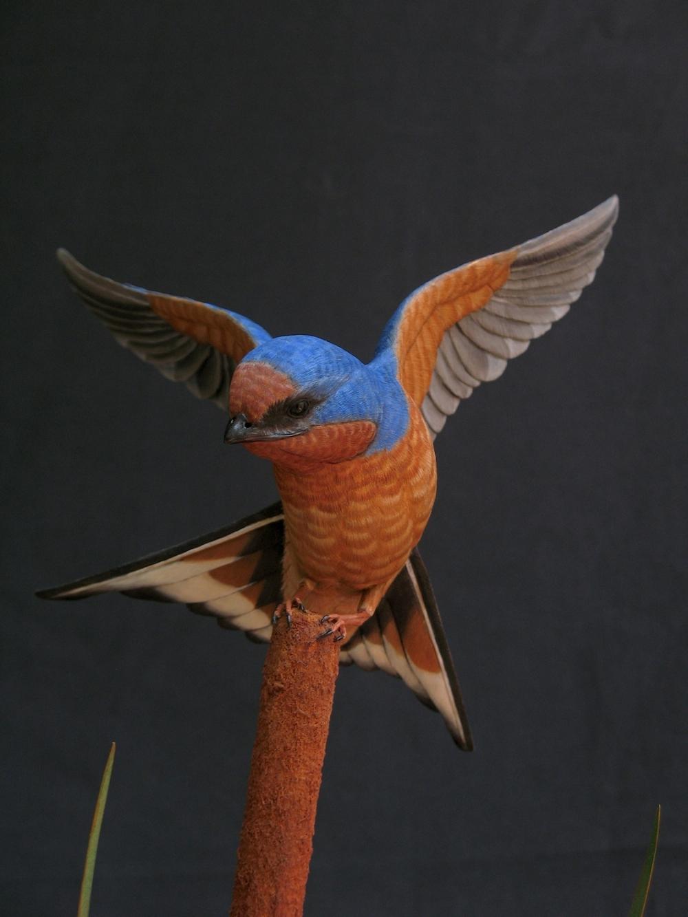 Barn Swallow, Life-sized, ♂