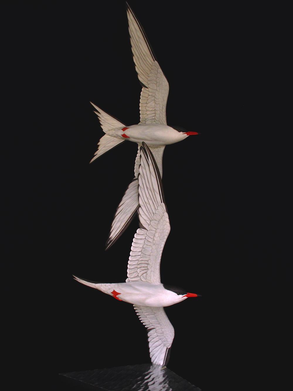 """Free Flight"", Common Terns, ♂"