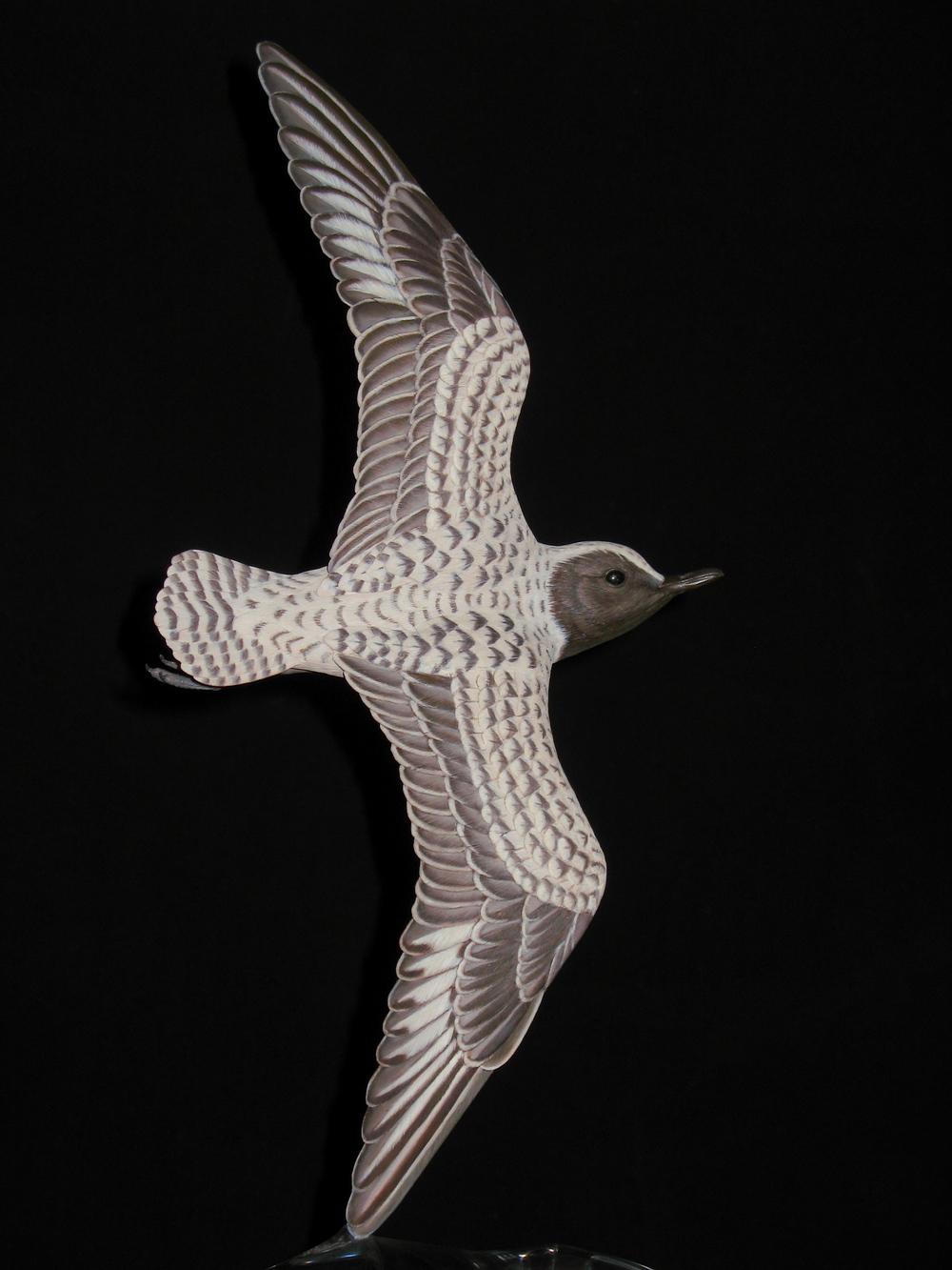 """Plover Flight in Black & White"", Black-bellied Plover, Life-sized, ♂"
