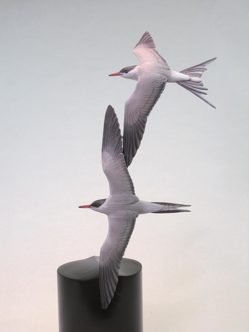 """""""Free Flight"""", Least Terns, Miniature, ♂♂"""
