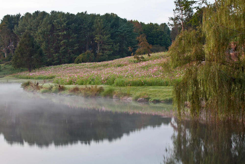 boarshead_meadow-5933.jpg