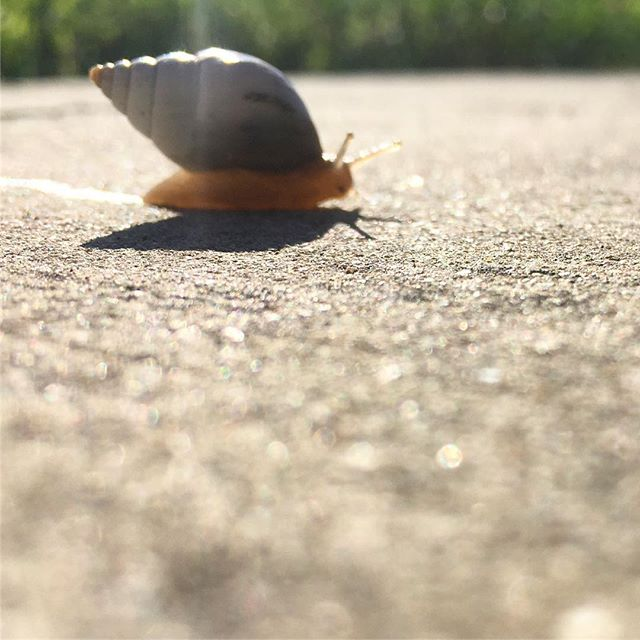 Met this little friend while running. We're all doing it at our own pace, buddy. #running #snail #hanginthere