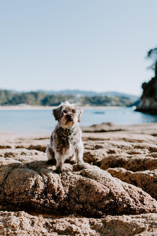 Kaiteriteri-Nelson-Family-Photographer-Summer-Beach-Abel-Tasman-09.jpg