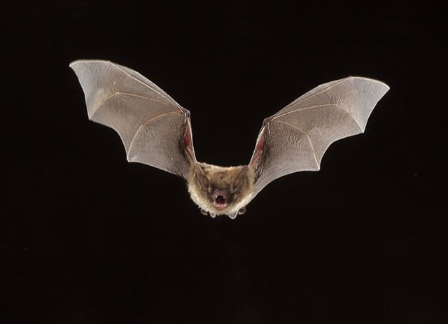 Happy #batappreciationday 🦇🦇🦇 We ♥️ the Little Brown Bats that live in the 1898 House bat house. Such a neat creature to watch fly around at dusk! Please consider installing a bat house to provide shelter for these little guys. Donating to @savethebats is another wonderful way to help our little bat friends. Thanks everyone! 🦇🦇🦇 #bats #bathouse #conservation