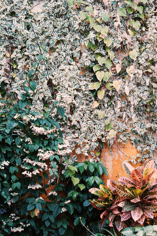 Taking Walks In Nature: Prescription for Wellness