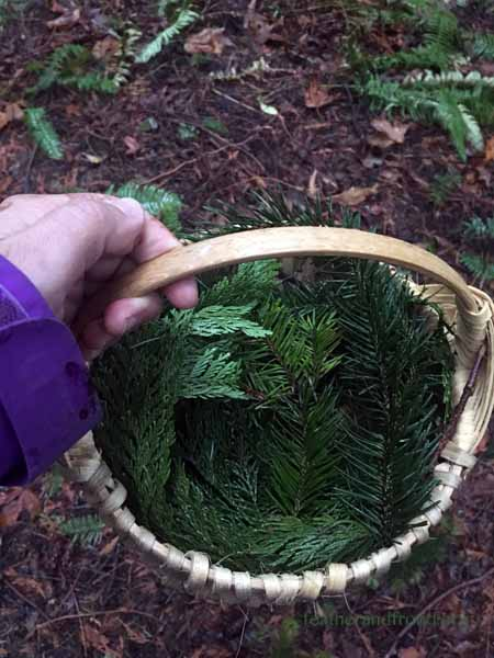 Foraging for Cedar and Fir!
