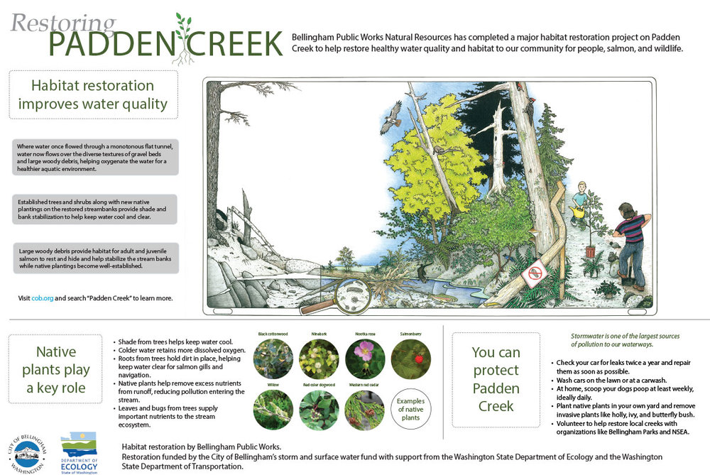 A cool poster from the City of Bellingham with more info about habitat restoration around Padden Creek.  Read all about the project at:  https://www.cob.org/services/environment/restoration/Pages/padden-creek-daylighting.aspx