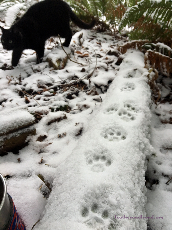 No mystery as to who made these tracks - Tracking your pets can be fun too!