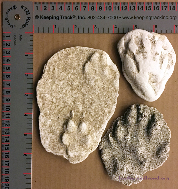 A few plaster casted tracks from our nature museum Collection