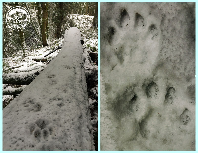 Perfect Puma tracks all day