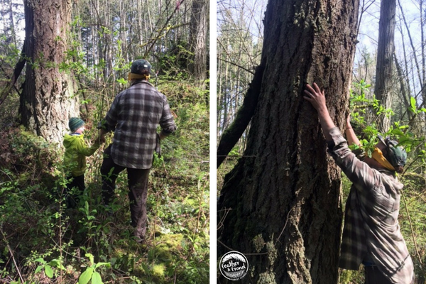 Using raccoon touch helps us get to know trees in a different way