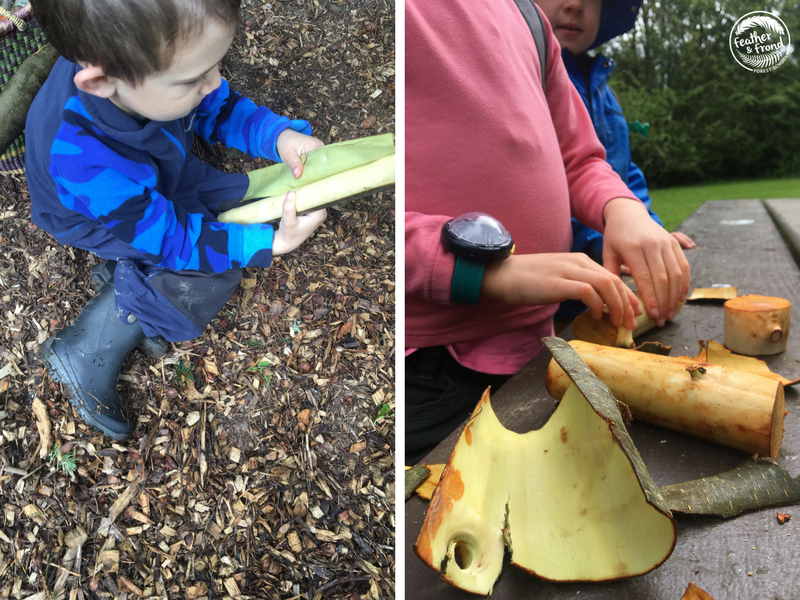 Peeling Maple and Alder bark and exploring sapwood!