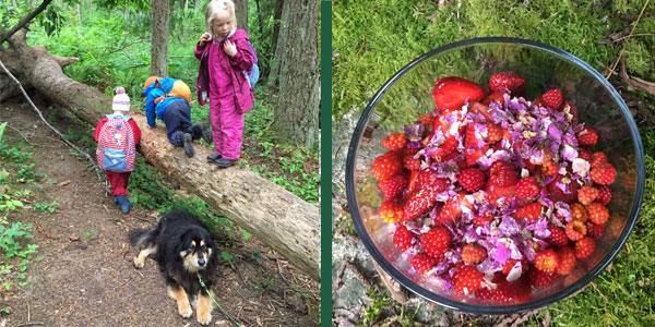 All sorts of Wild and Wooly creatures in the forest and a yummy fruit salad - farm fresh strawberries, wild salmonberries and candied wild Roses -- YUM!