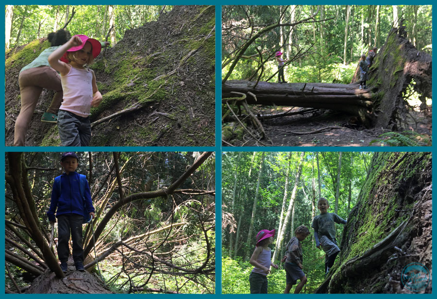 This amazing fallen Cedar tree was a magnet for the children to play and let it rip after focusing with their knives.