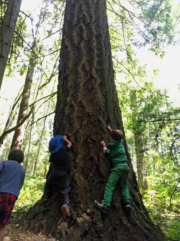 WW_7-12-tree-climb.jpg