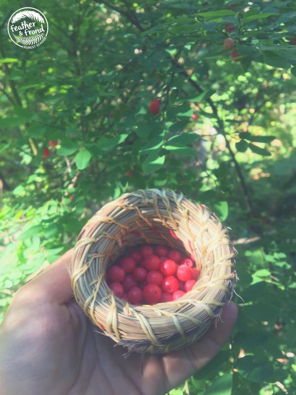 red Huckleberry abundance!