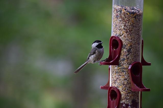 bird-2149718_640.jpg