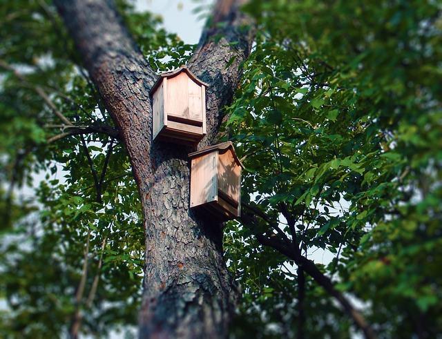 bat-boxes-1581018_640.jpg