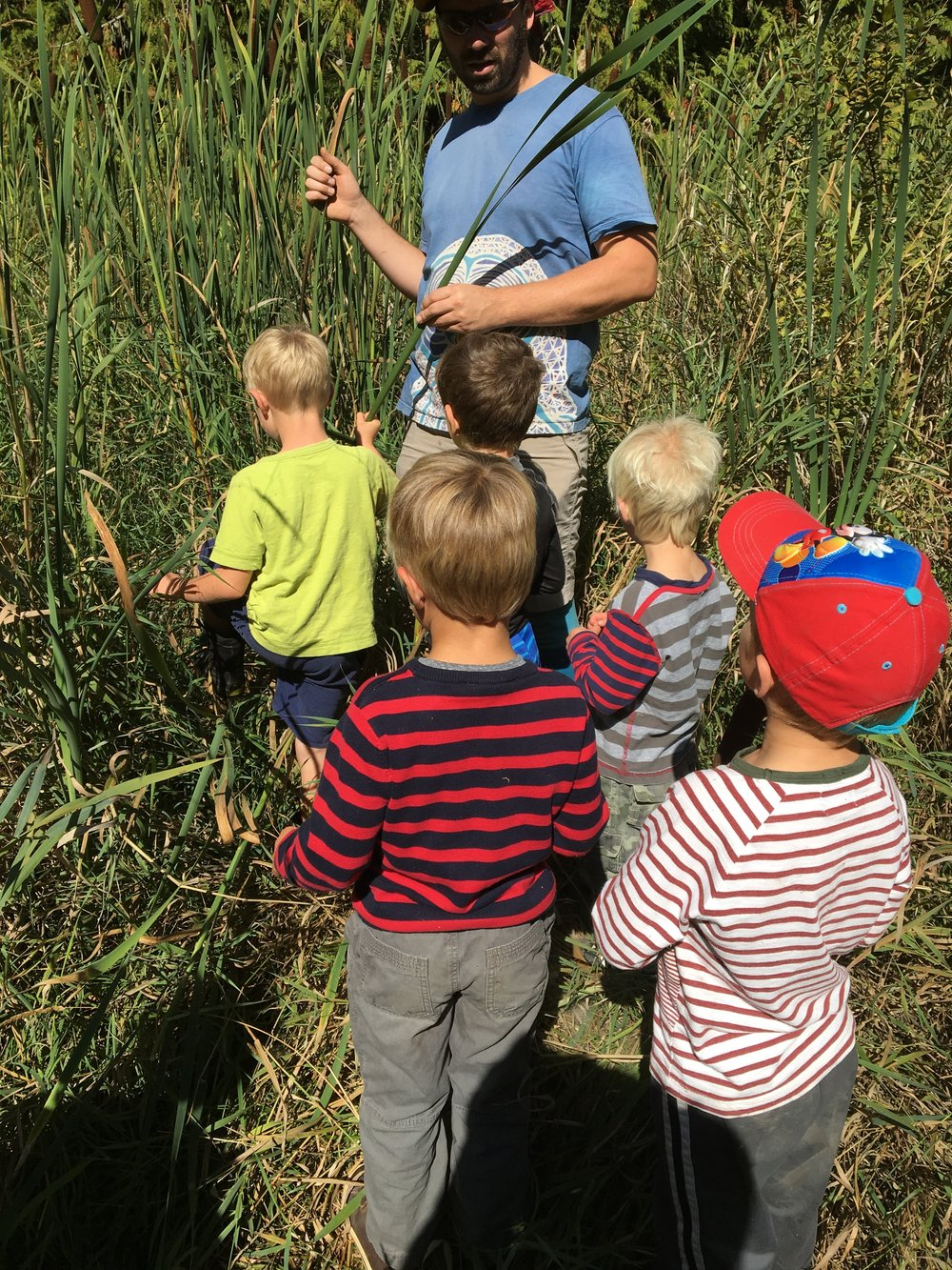 Exploring Cattails