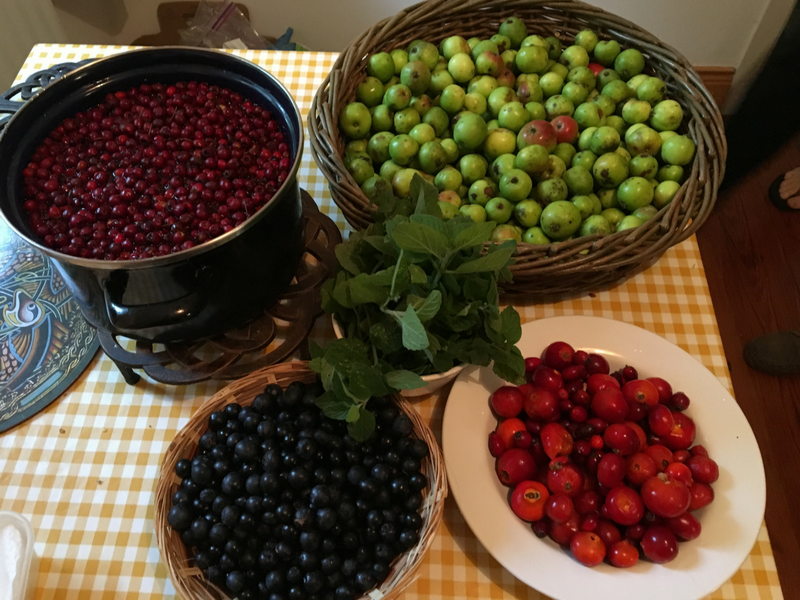 The Incredible abundance of wild edible fruits that we harvested in ireland: Hawthorne Berries, Crab apples, Sloe berries, and Rose Hips