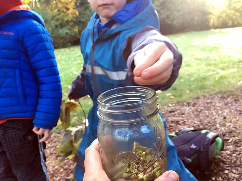 Collecting the Cottonwood buds in a jar