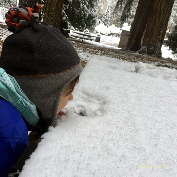 Snow Taste Testing