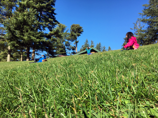 What an Epic Sunny Day for Rolling Down a Hill!