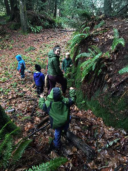 Sampling licorice fern root found growing on a big boulder!