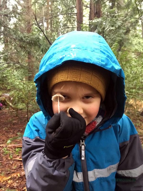 Mushroom Hunter!