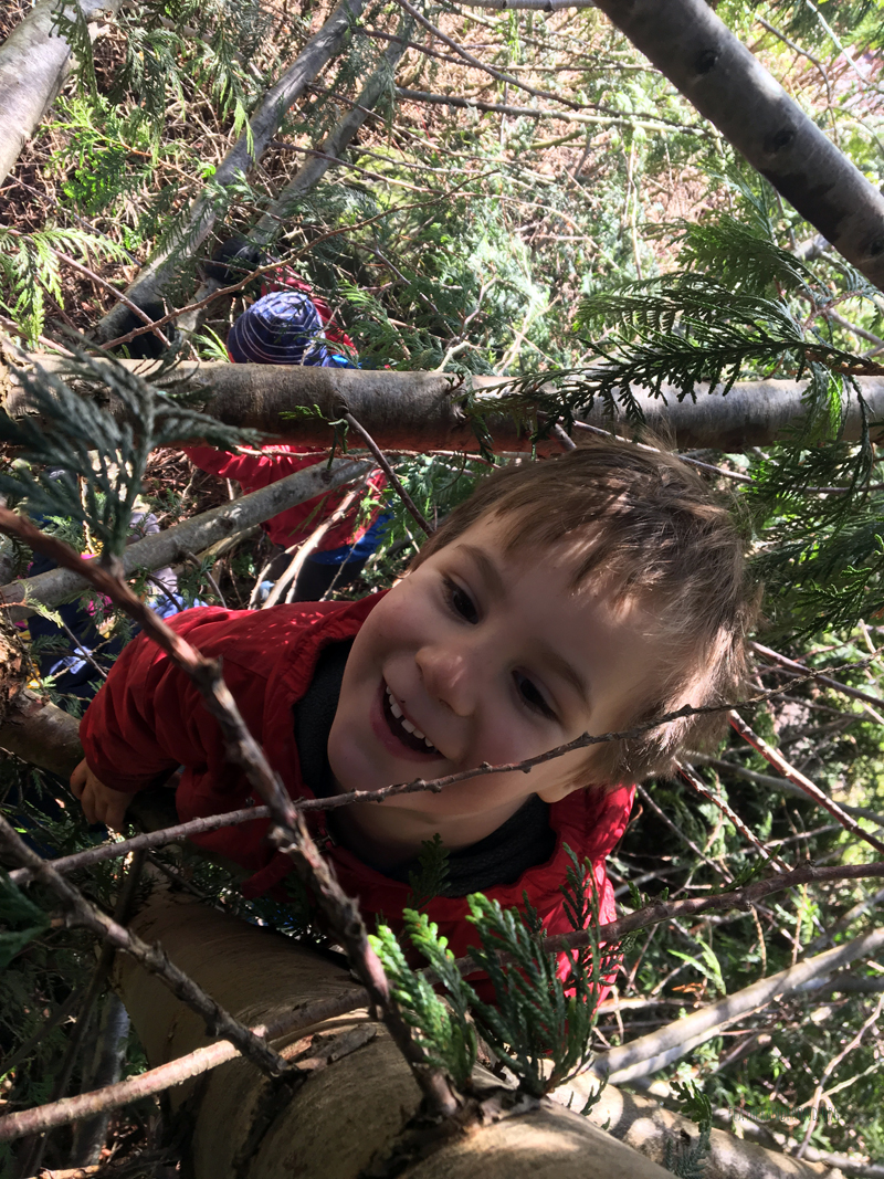 Tree Climbing Bliss!