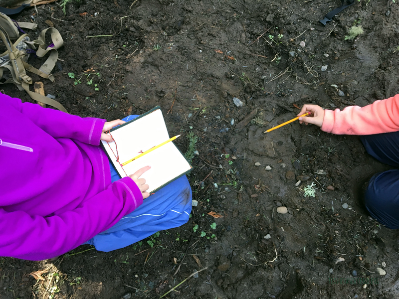 Journaling Animal tracks