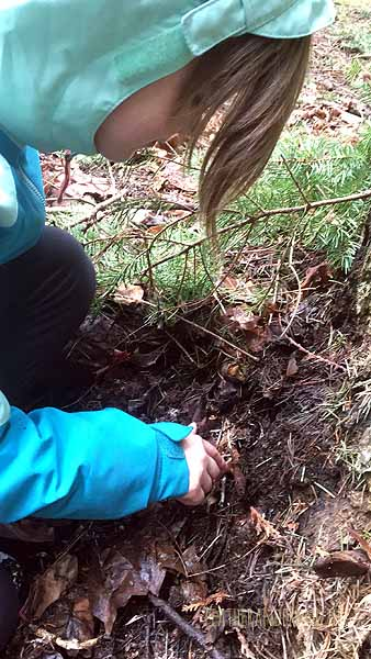 Searching in the wet debris for salamanders