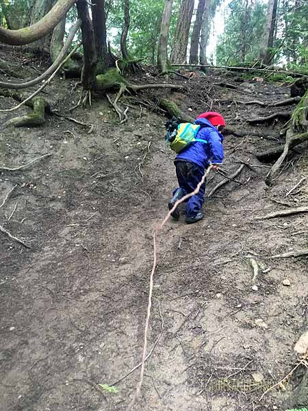 Cedar roots make excellent climbing rope!