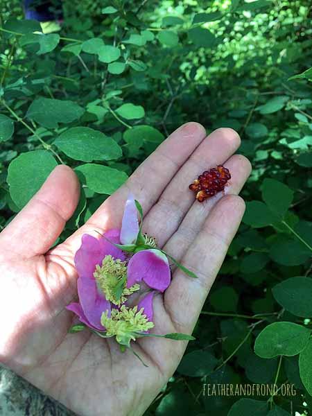 Mmm.. Salmonberry & Rose!!