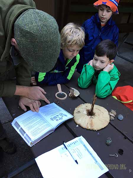 Using a key to ID the Genus of a massive mushroom!