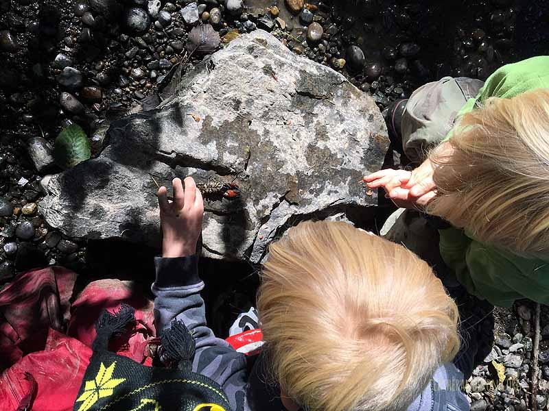 We found a crayfish!