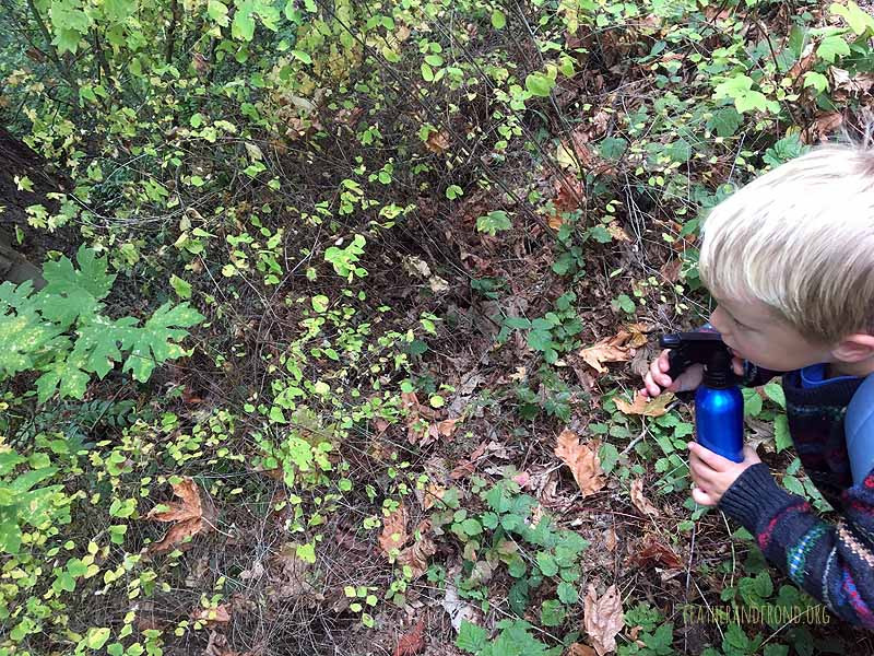 Using our Magic Spider Spray to reveal webs